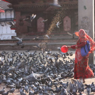 A woman feeds the pigeons in Nepal.